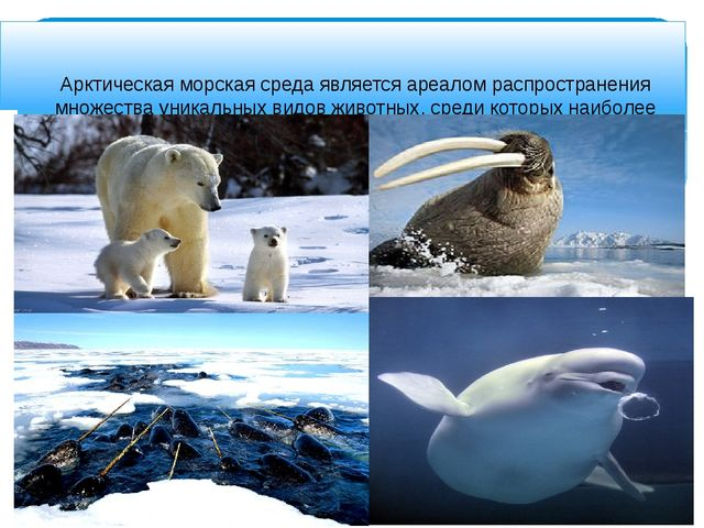 Арктическая морская среда является ареалом распространения множества уникаль...