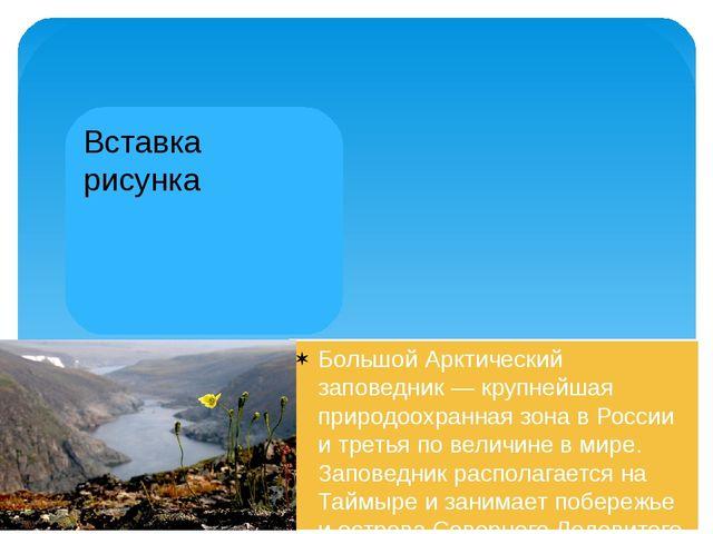 Арктическая природа прекрасна и очень ранима. На территории русской Арктики...
