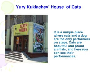 Yury Kuklachev' House of Cats It is a unique place where cats and a dog are t