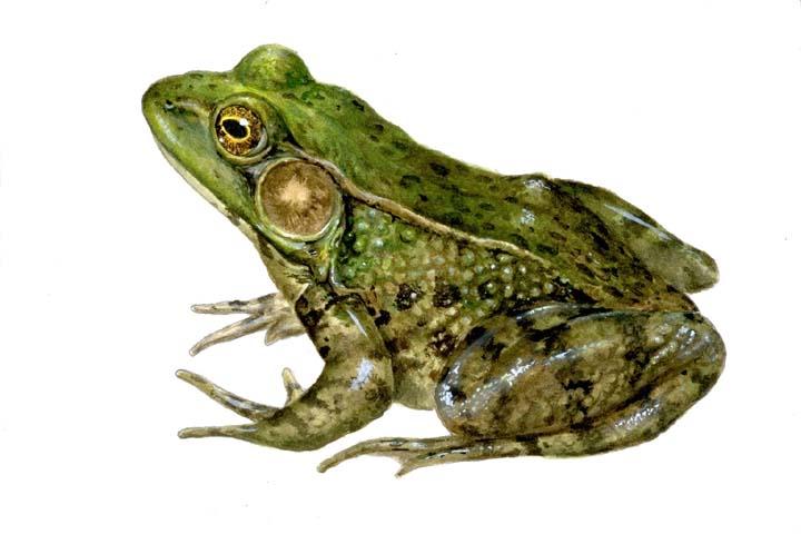 Rated by iua жаба