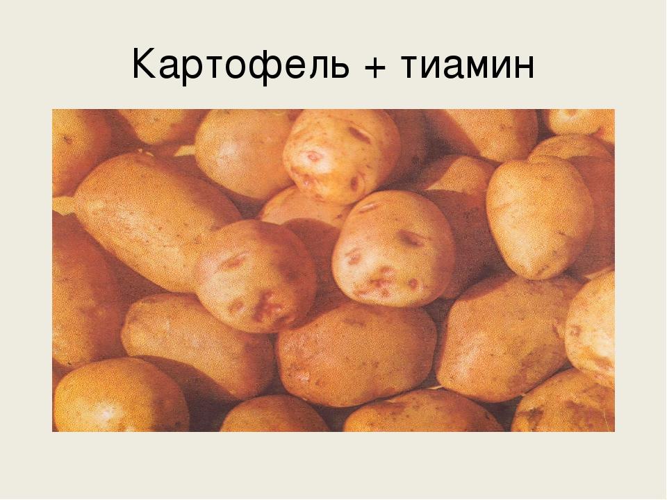 Картофель + тиамин
