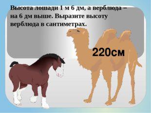Высота лошади 1 м 6 дм, а верблюда – на 6 дм выше. Выразите высоту верблюда в