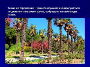 Также на территории Нижнего парка можно прогуляться по длинной пальмовой алле