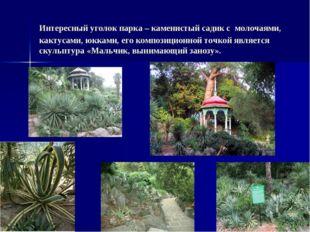 Интересный уголок парка – каменистый садик с молочаями, кактусами, юкками, ег