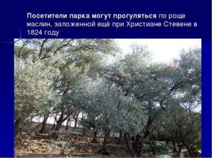 Посетители парка могут прогулятьсяпо роще маслин, заложенной ещё при Христиа