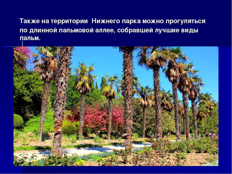 Также на территории Нижнего парка можно прогуляться по длинной пальмовой алле...