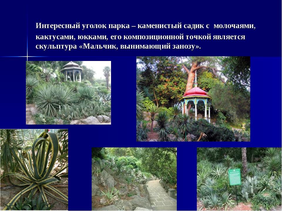 Интересный уголок парка – каменистый садик с молочаями, кактусами, юкками, ег...