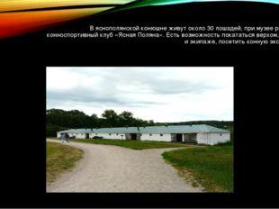 В яснополянской конюшне живут около 30 лошадей, при музее работает конноспорт