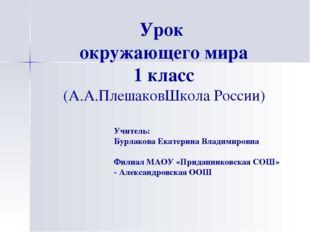 Урок окружающего мира 1 класс (А.А.ПлешаковШкола России) Учитель: Бурлакова Е