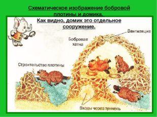 Схематическое изображение бобровой плотины и домика. Как видно, домик это отд