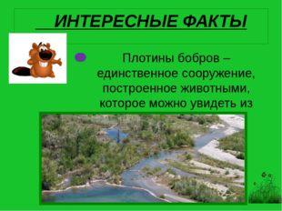 Плотины бобров – единственное сооружение, построенное животными, которое можн