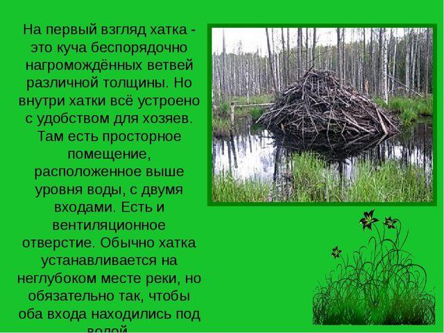 На первый взгляд хатка - это куча беспорядочно нагромождённых ветвей различно...