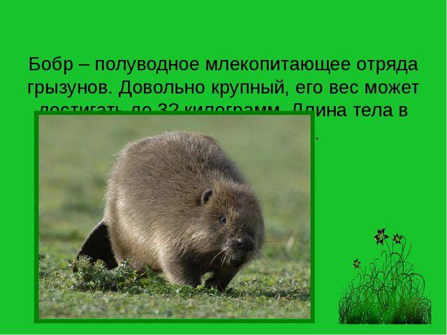 Бобр – полуводное млекопитающее отряда грызунов. Довольно крупный, его вес мо...