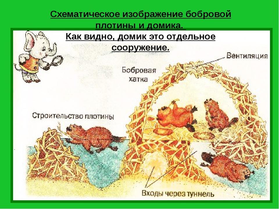 Схематическое изображение бобровой плотины и домика. Как видно, домик это отд...