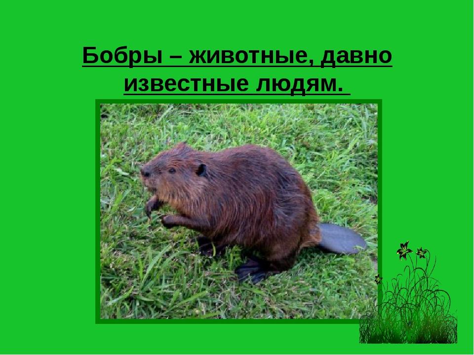 Бобры – животные, давно известные людям.