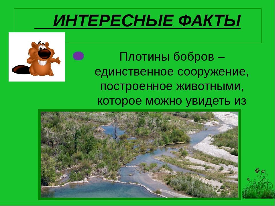Плотины бобров – единственное сооружение, построенное животными, которое можн...