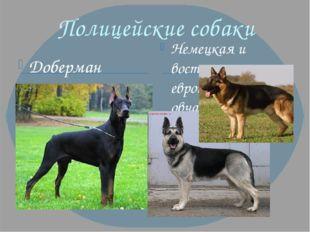 Полицейские собаки Доберман Немецкая и восточно - европейская овчарка
