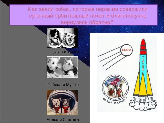 Как звали собак, которые первыми совершили суточный орбитальный полет и благо...