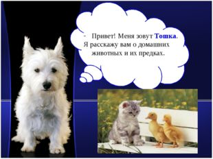 Привет! Меня зовут Тошка. Я расскажу вам о домашних животных и их предках. ww