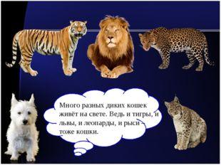 Много разных диких кошек живёт на свете. Ведь и тигры, и львы, и леопарды, и