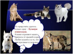 Но приручить удалось только одну – буланую египетскую. Кошки охраняют наши пр