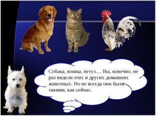Собака, кошка, петух… Вы, конечно, не раз видели этих и других домашних живот
