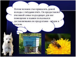 Потом человек стал приносить домой колоды с гнёздами пчёл. Он предоставлял пч