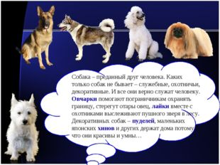 Собака – преданный друг человека. Каких только собак не бывает – служебные, о