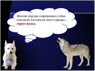Многие породы современных собак совсем не похожи на своего предка – серого во