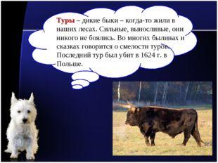 Туры – дикие быки – когда-то жили в наших лесах. Сильные, выносливые, они ник