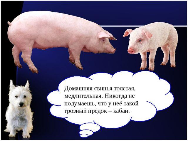 Домашняя свинья толстая, медлительная. Никогда не подумаешь, что у неё такой...