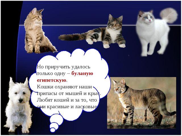 Но приручить удалось только одну – буланую египетскую. Кошки охраняют наши пр...