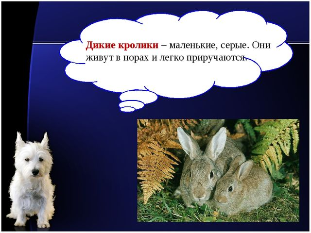 Дикие кролики – маленькие, серые. Они живут в норах и легко приручаются.