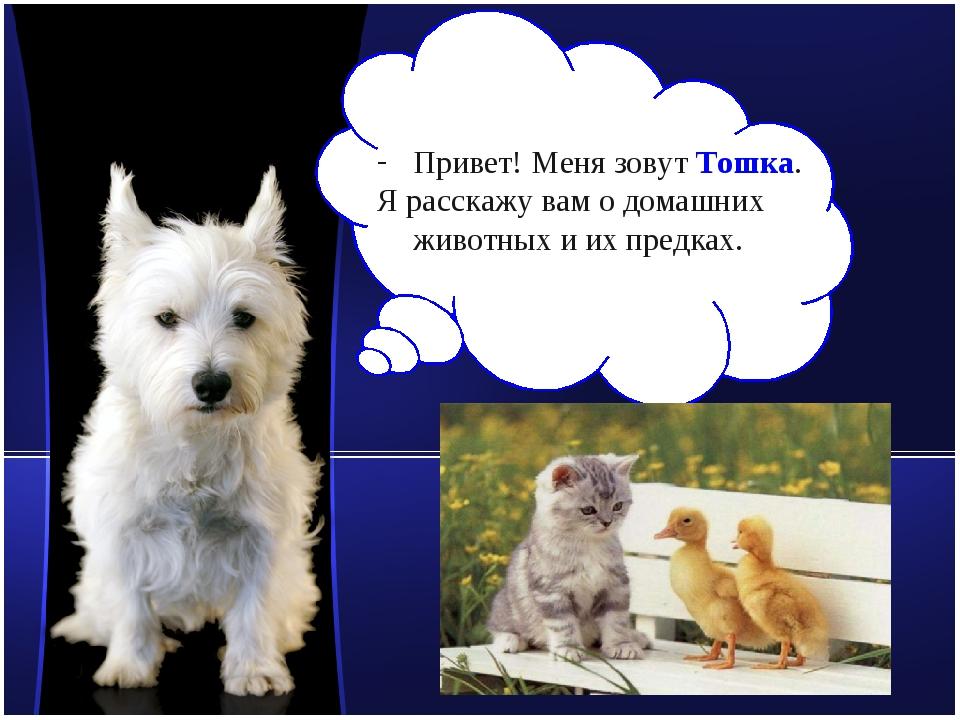 Привет! Меня зовут Тошка. Я расскажу вам о домашних животных и их предках. ww...