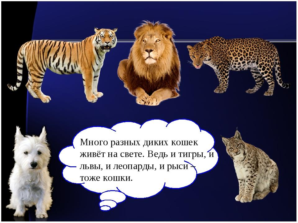 Много разных диких кошек живёт на свете. Ведь и тигры, и львы, и леопарды, и...
