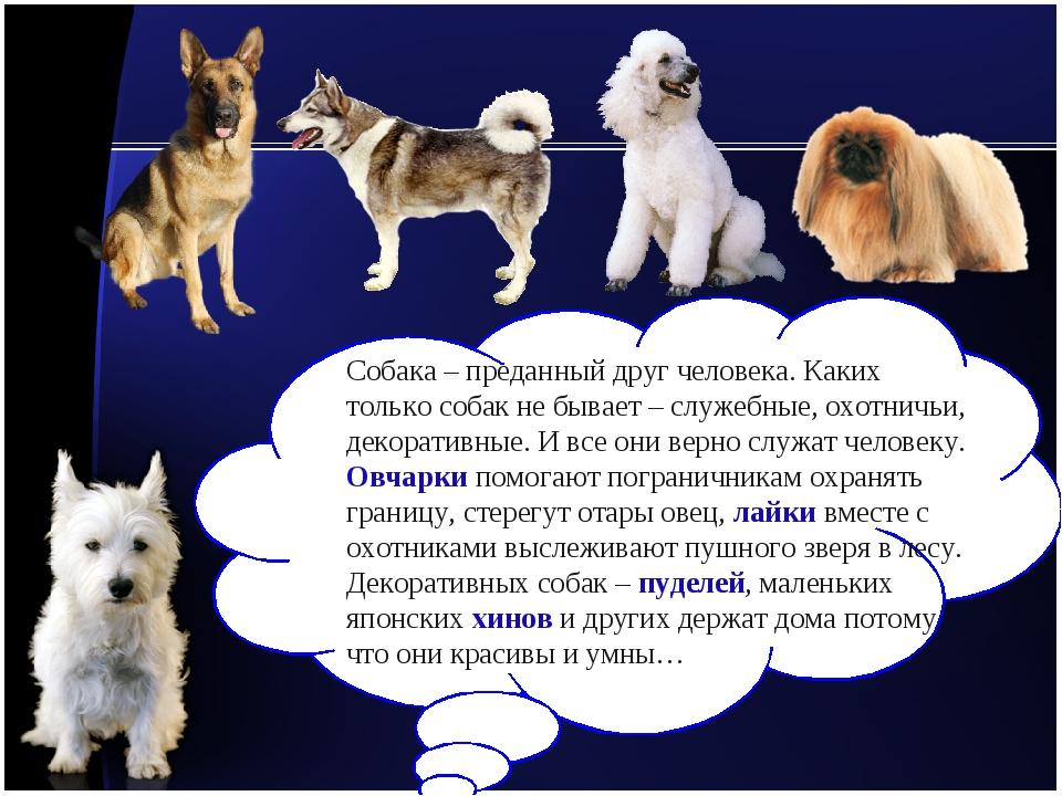 Собака – преданный друг человека. Каких только собак не бывает – служебные, о...