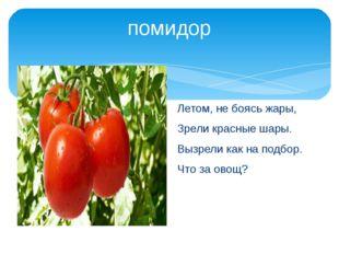 помидор Летом, не боясь жары, Зрели красные шары. Вызрели как на подбор. Что