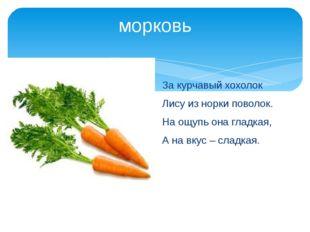 морковь За курчавый хохолок Лису из норки поволок. На ощупь она гладкая, А на