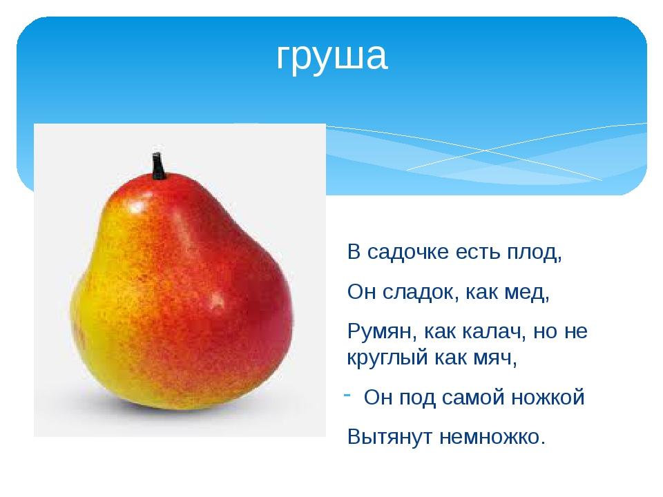 груша В садочке есть плод, Он сладок, как мед, Румян, как калач, но не круглы...