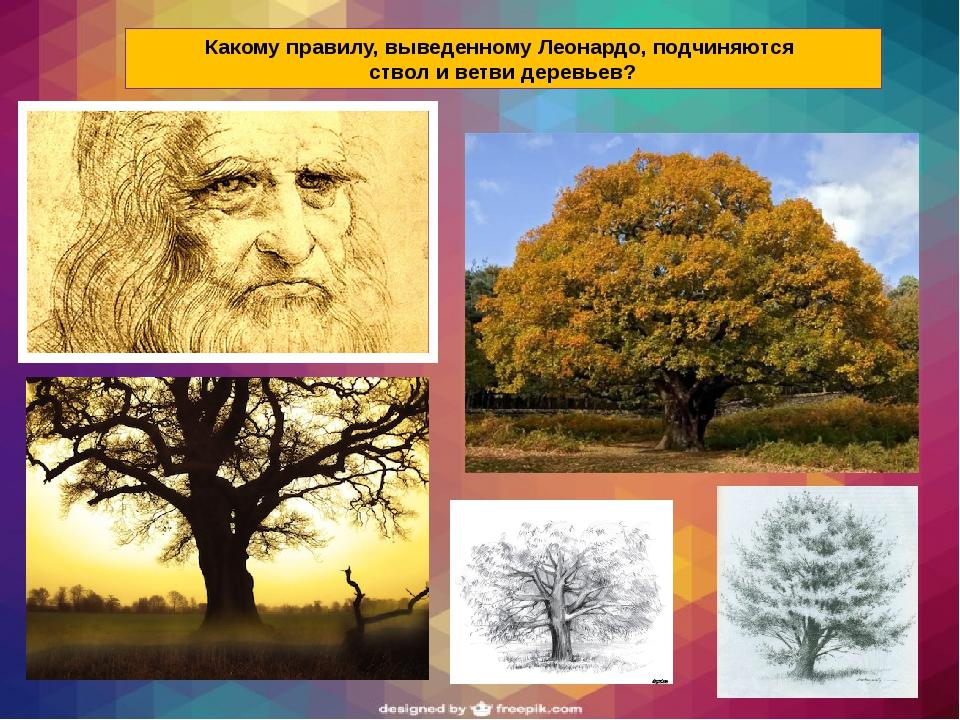 Какому правилу, выведенному Леонардо, подчиняются ствол и ветви деревьев?
