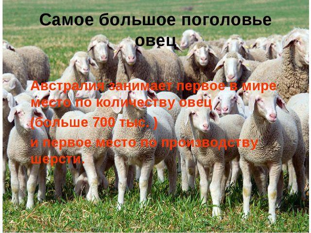 Самое большое поголовье овец Австралия занимает первое в мире место по количе...