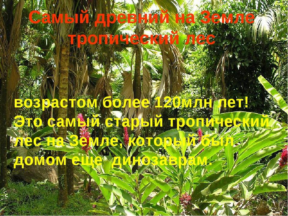 Самый древний на Земле тропический лес возрастомболее 120млн лет! Этосамый...