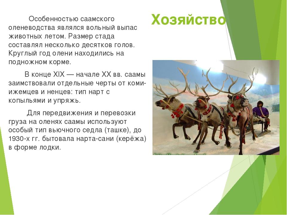 Хозяйство Особенностью саамского оленеводства являлся вольный выпас животных...