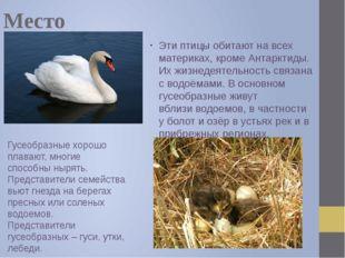 Место обитания Эти птицы обитают на всех материках, кроме Антарктиды. Их жизн