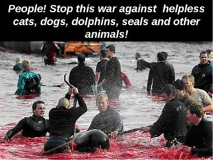 People! Stop this war against helpless cats, dogs, dolphins, seals and other