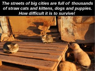 The streets of big cities are full of thousands of straw cats and kittens, do