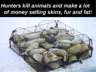 Hunters kill animals and make a lot of money selling skins, fur and fat!