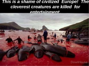 This is a shame of civilized Europe! The cleverest creatures are killed for e