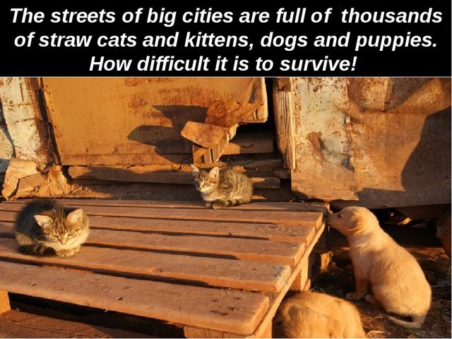 The streets of big cities are full of thousands of straw cats and kittens, do...