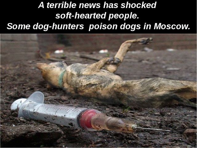 A terrible news has shocked soft-hearted people. Some dog-hunters poison dog...